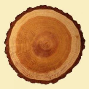 лиственница - торец